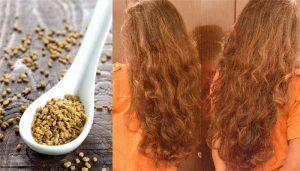 وصفة الحلبة لتقوية الشعر